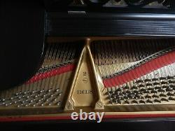 Steinway Model B Grand Piano 1905